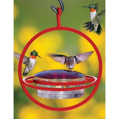 Circle Hummingbird Feeder