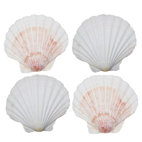 Scallop Baking Shells