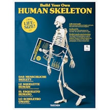 Build Your Own Human Skeleton Cardboard Kit